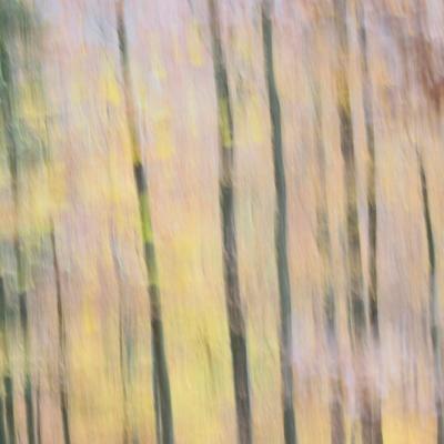 Forêt en automne 2