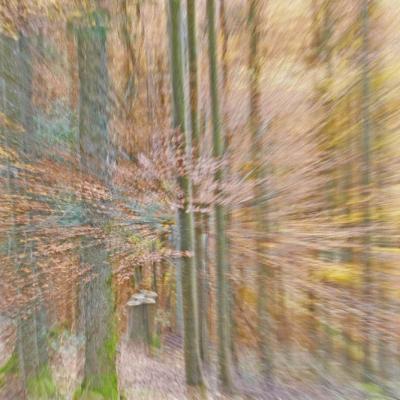 Forêt en automne 3