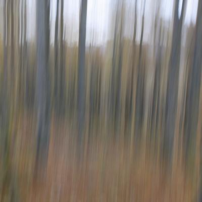 Forêt fantome 1