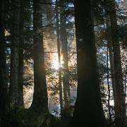 Lever de soleil en forêt.
