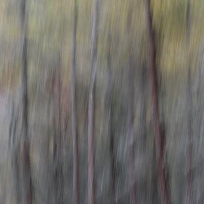 Mélèzes