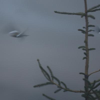 Migration dans le brouillard .